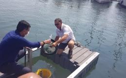 """PRESENTATO IL """"SEABIN"""", PATTUMIERA DI MARE CHE RACCOGLIE MICROPLASTICHE"""